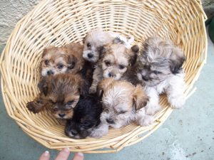 Popular Internet Scams often Involve Puppies